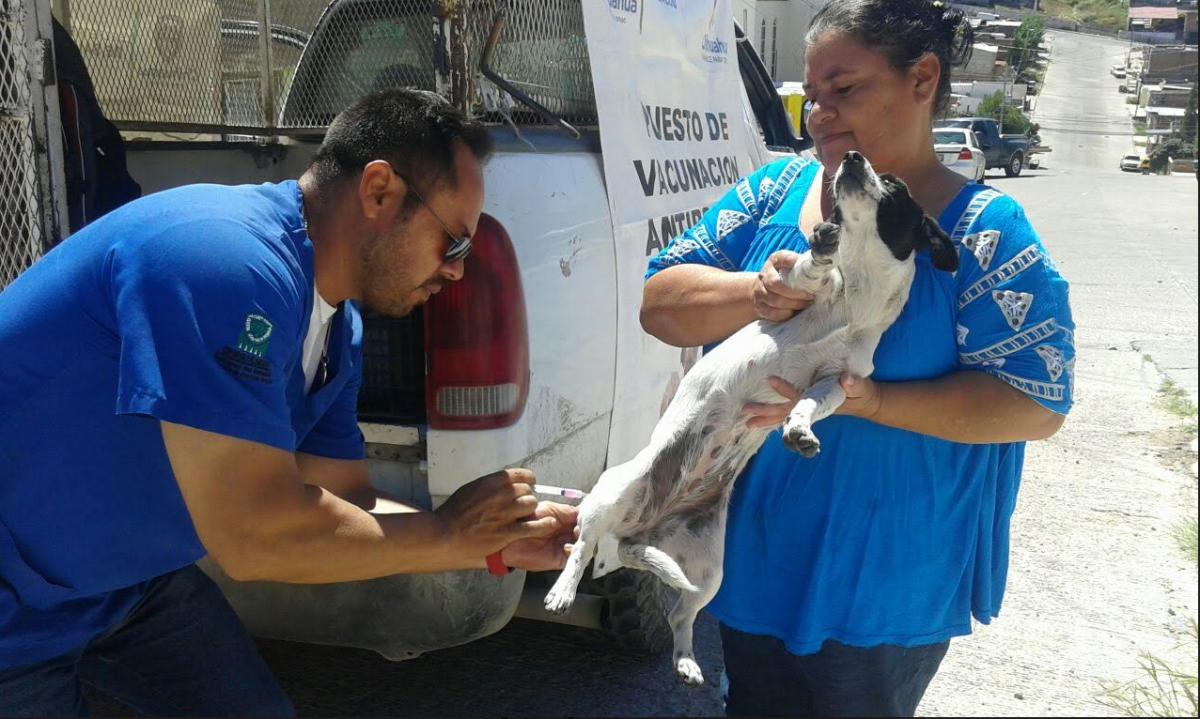 Arranca en Coahuila semana de vacunación antirrábica